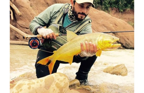 Golden fish from Maxctach AVID reel