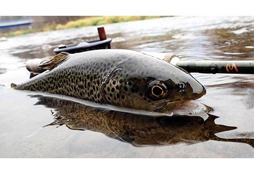 How to book trips and rooms for bozeman montana fly fishing