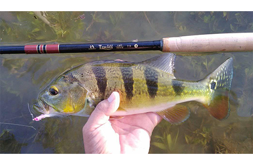How to Enjoy Fly Fishing for Bluegill