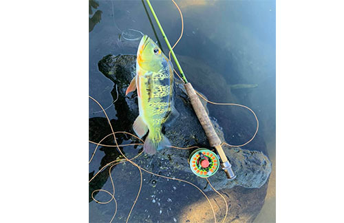 You can learn through fly fishing stickers