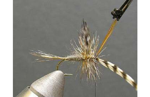 How to Tie On a Fly for Fly Fishing
