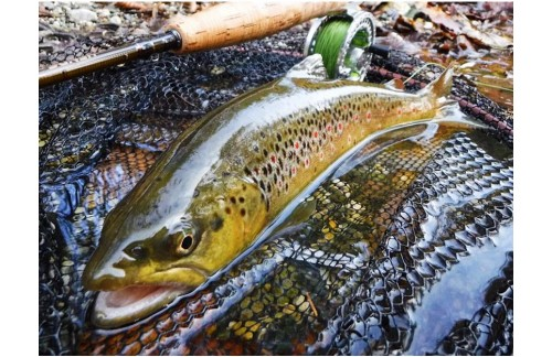 3 Questions for Trouts Fly Fishing