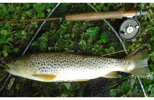 What is Fly Fishing Specialties?