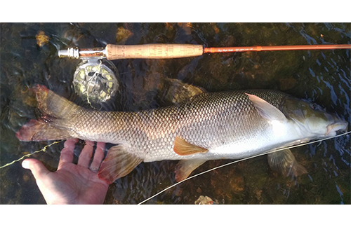 Versatile roll cast fly fishing